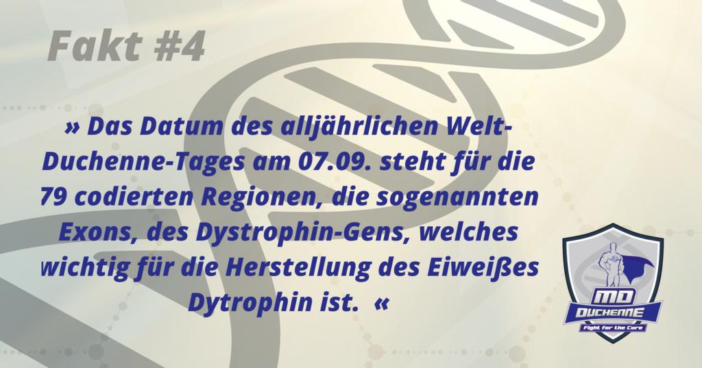 Fakt #4 » Das Datum des jährlichen Welt-Duchenne-Tages am 07.09. steht für die 79 codierten Regionen, die sogenannten Exons, des Dystrophin-Gens, das ursächlich für die Erbkrankheit Duchenne-Muskeldystrophie verantwortlich ist. «